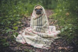El seguro para animales domésticos en Alemania